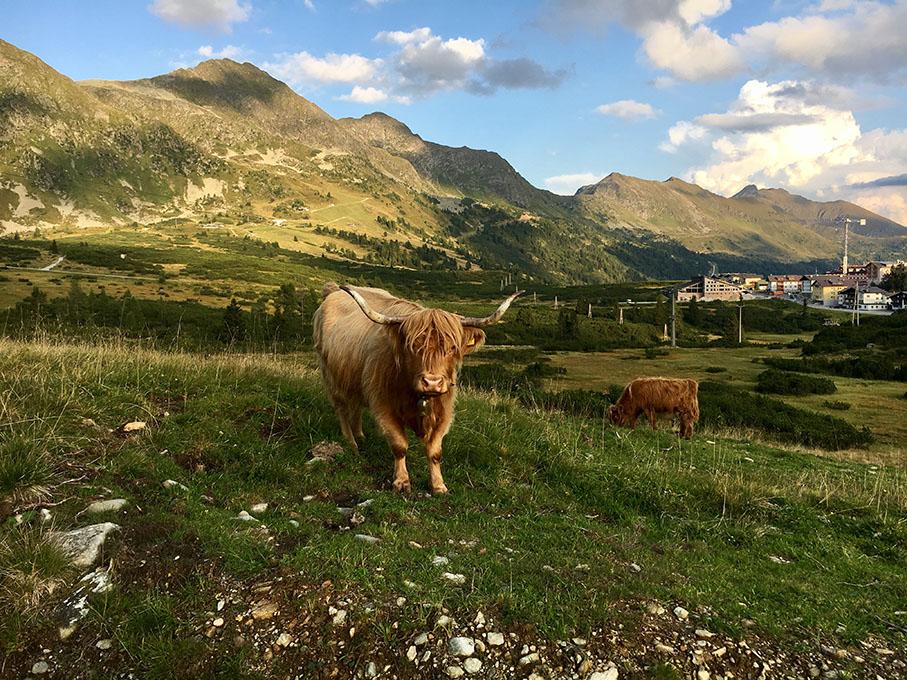 Obertauern im Sommer, Blick auf Obertauern, Plattenkar und Edelweißalm