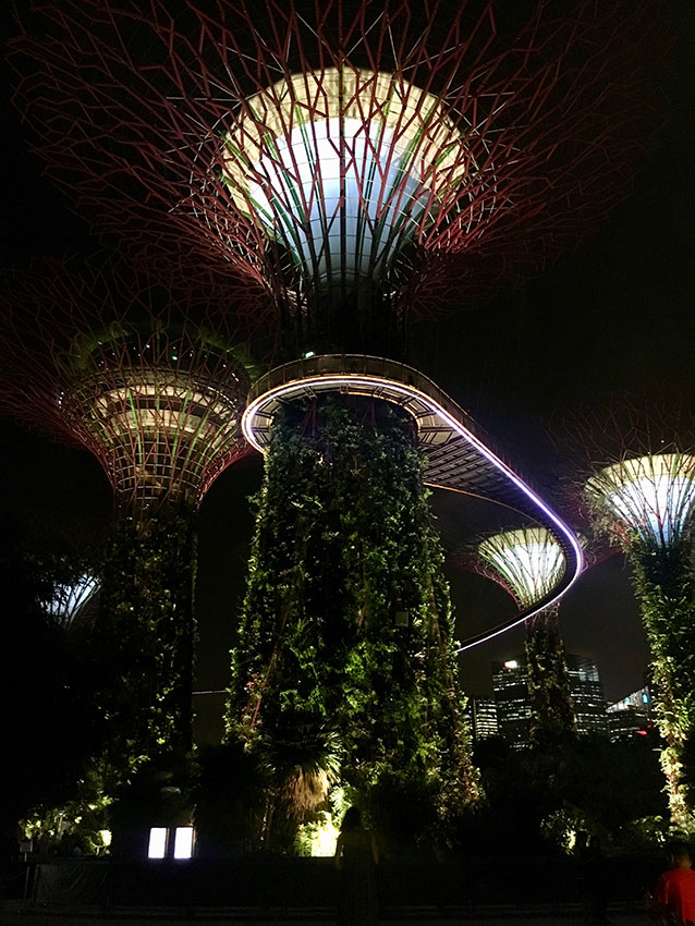 Supertrees im Gardens of the Bay in Singapur